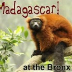 Madagascar! at the Bronx Zoo Freebies